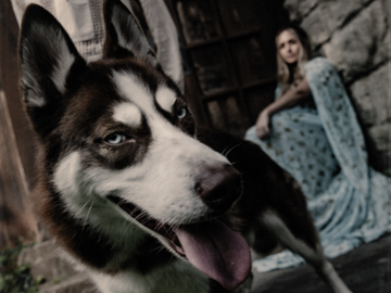 A husky for Game of Thrones theme shoot