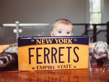 Ferrets, ferrets are everywhere!