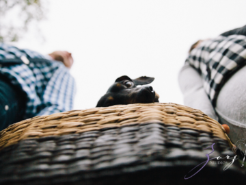 Curious dog in a picnic basket