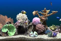 Free Consultation: AMS Aquarium Maintenance Service - Sacramento, CA