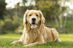 Request Quote: Allison Shamrell Pet Photography - San Diego, CA