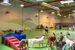Wags & Wiggles Dog Daycare - Orange County, CA