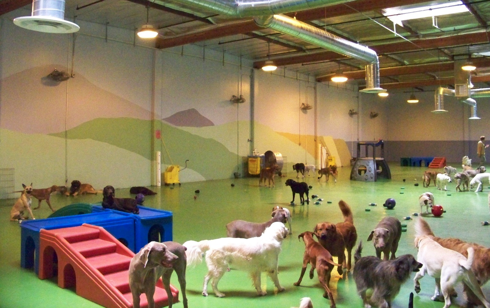 Indoor Dog House Training