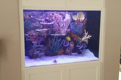 Free Consultation: Aquarium Design and Maintenance - San Diego, CA