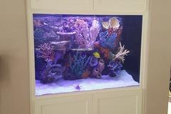 Request Quote: Aquarium Design and Maintenance - San Diego, CA