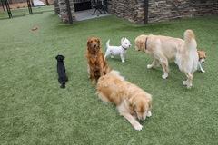 Laurel Oak Farm Dog Kennel - Charlotte, NC