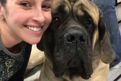 Request Quote: Canine Massage - Bear, DE - Elkton, MD