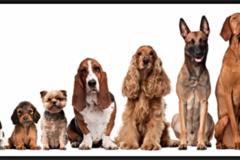 Bookable Offer: Nana Mary - Dog Training in the 805 - Ventura, CA