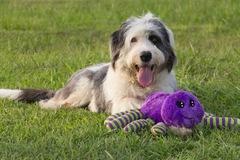 Request Quote: Wholistic Woofers & Co. - Pet Photography - Houston, TX