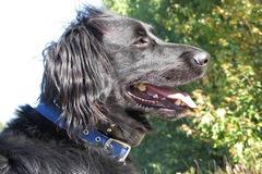 All Care Pet Care - Wareham, MA