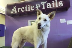 Arctic Tails Doggie Daycare Boarding & Grooming-Anchorage AK