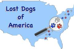 Free Consultation: Lost Dogs of America