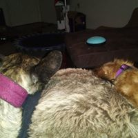 Dog Trainer/Walker - Beaverton, OR