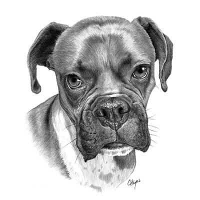 Colin Hayes Art, Pet Portraits - Spokane Valley, WA