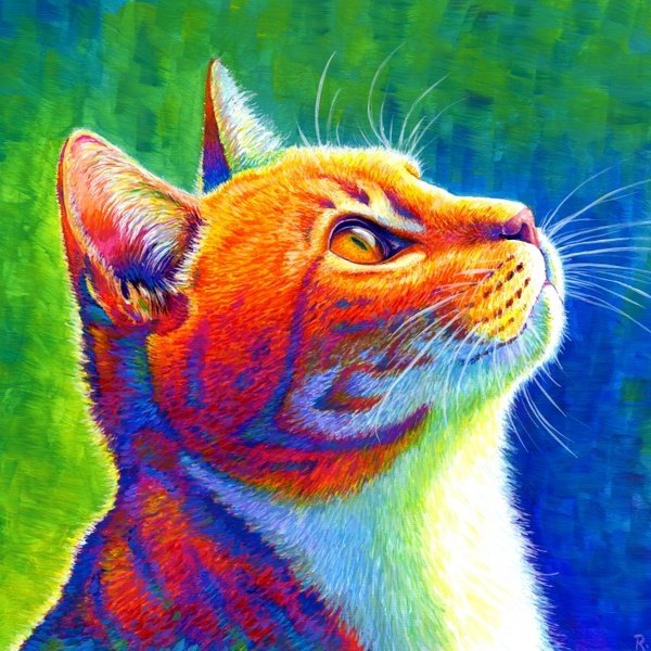 Custom Colorful Pet Portraits by Rebecca Wang