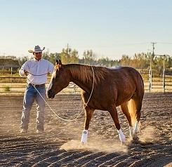JWHA Horsemanship Academy - Farmington, UT