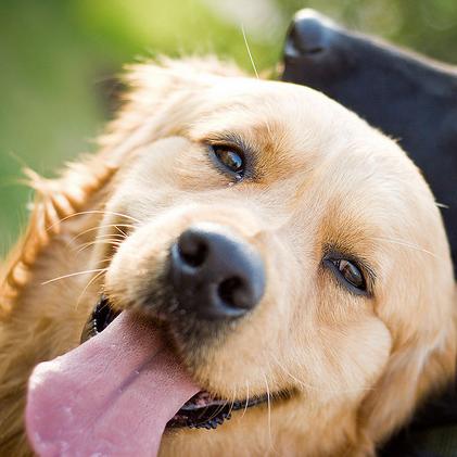 Happy Dog - Baltimore, MD