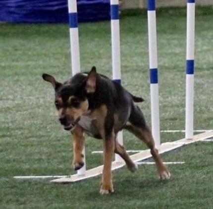 Canine sports   activity center