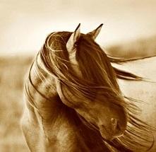 Tony Stromberg Photography - Santa Fe, NM