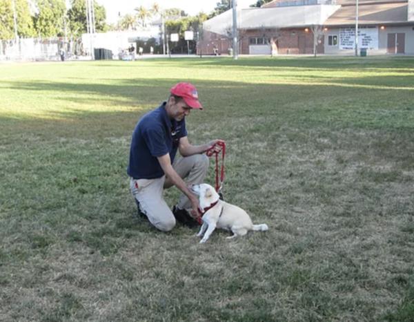 Rip's Dog Training - Conway, SC