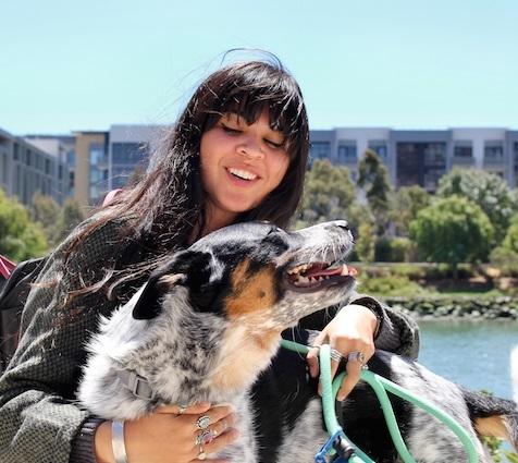 Blue Dog SF - San Francisco, CA