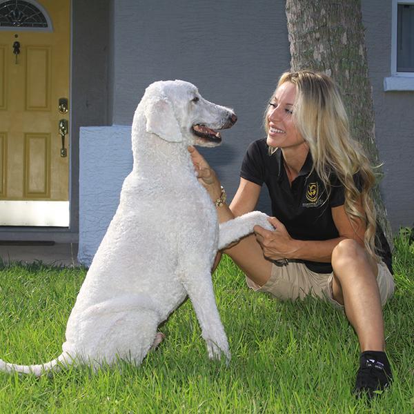 Dog Walking / Pet Sitting - Sarasota, FL