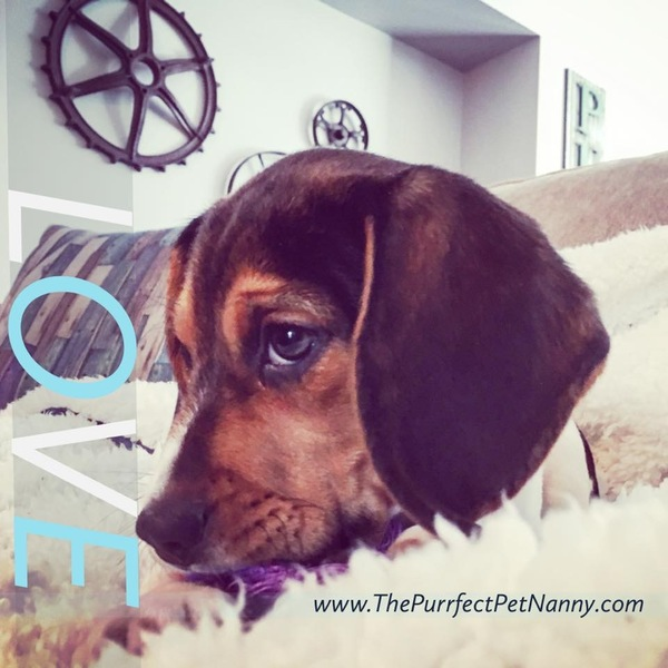 The Purrfect Pet Nanny, LLC - Phoenixville, PA