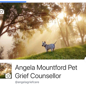 Angela Mountford pet grief cou