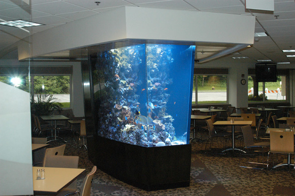 Professional Aquarium services  - Glastonbury, CT