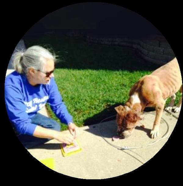 Mind Your Manners Pet Training, LLC. - Omaha, NE