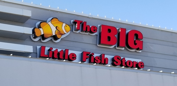 The Big Little Fish Store