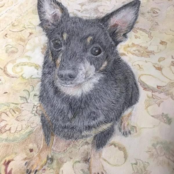 Linda Hardman Pet Portraits  - Charlotte, NC