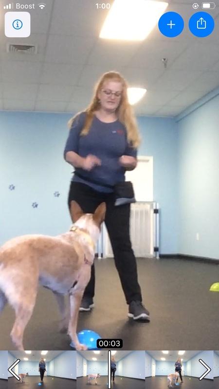 Benevolent Sun Dog Training