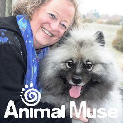 Animal Muse Communication, Reiki, and Pet Grief Counseling
