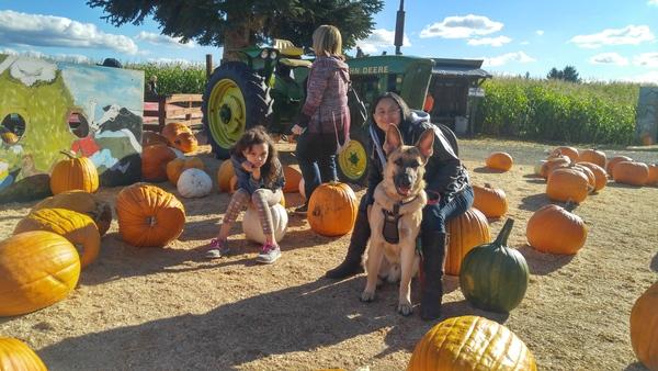 Dog Obedience Instructor - San Diego, CA