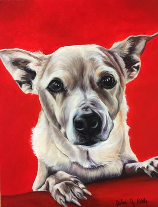 Dog12