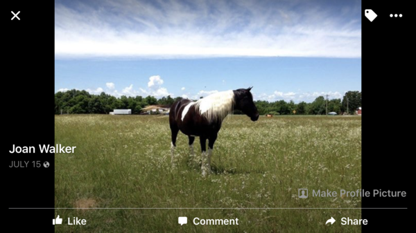 Boudreau's Acres Horse Boarding & Horse Motel-Springfield MO
