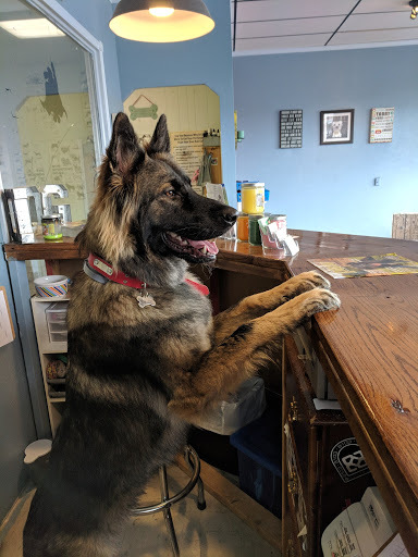 Tidy Dog Pet Supply & Salon - Nashville, TN