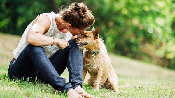 Dogs On The Run - Premium Pet Care - Carlsbad, CA