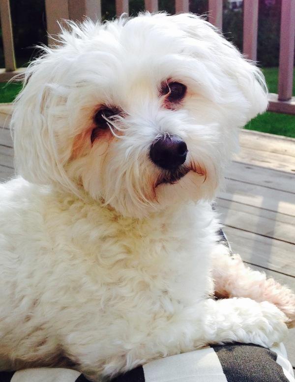 Canine Massage Practioner - Sarasota, FL