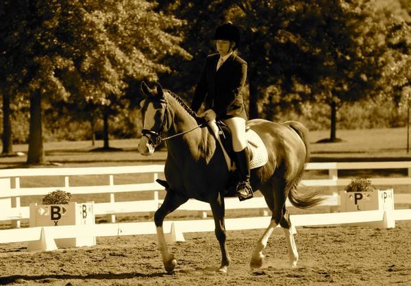 Horsesense Bodywork - Harvard, MA
