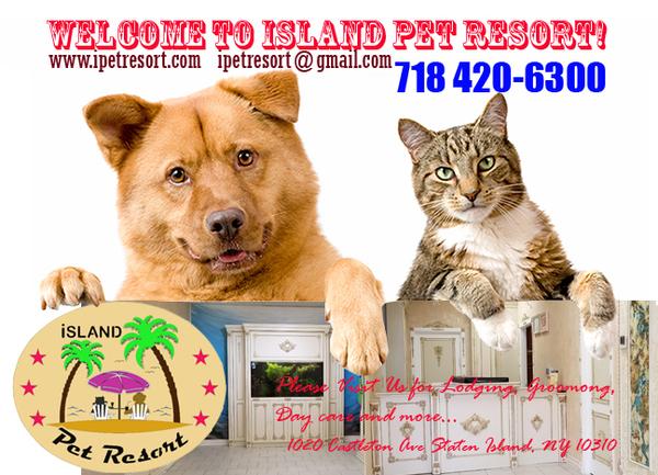 Island Pet Resort - Staten Island, NY