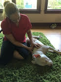 1 Hour House Call Animal Massage Session - Des Plaines, IL