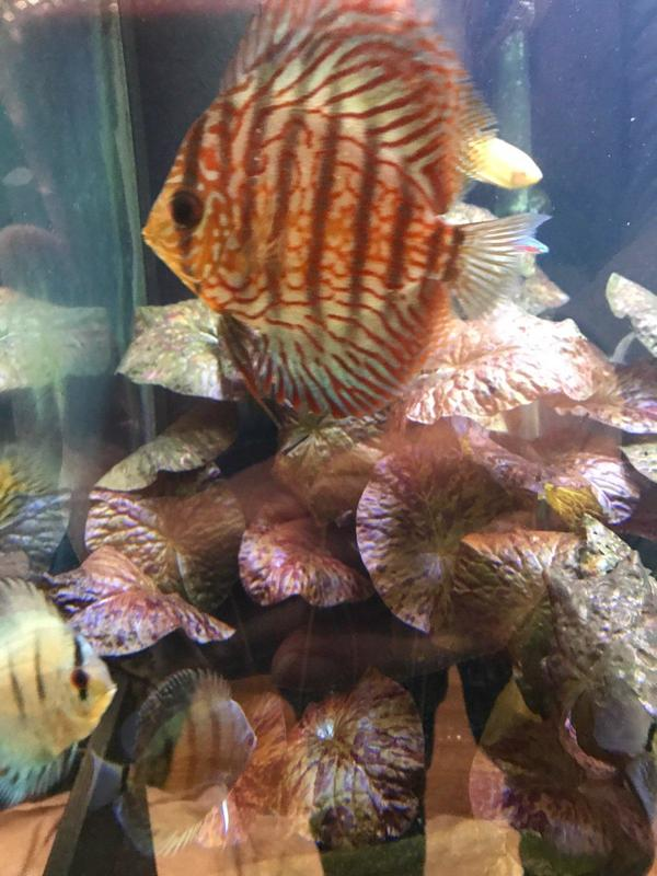 Aquarium Maintenance - Ashland, MA
