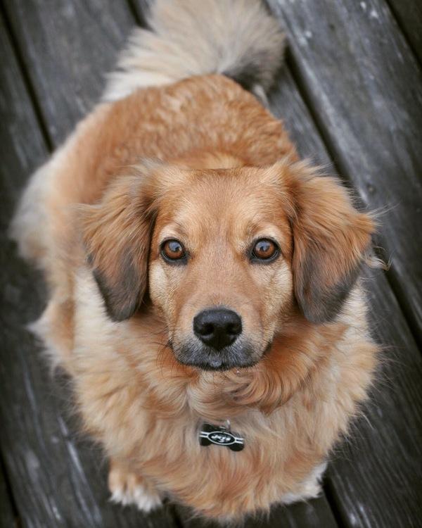 Canine Camera Pet Photography - Chappaqua, NY