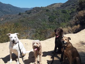 Santa monica dog hikers   profile