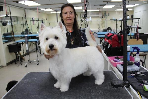 Loving Cuts Mobile Pet Grooming - Port St Lucie, FL