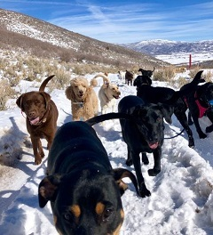 Doggo camp