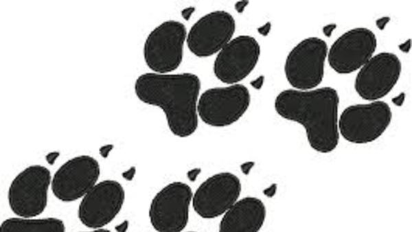 Fur-Buddy Pet Cremation - Lake View, AL