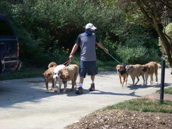 Walkin-n-Waggin Dog Walking & Pet Sitting, Winston-Salem, NC